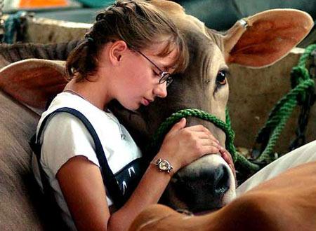 圖文:女孩撫摸自家的小牛