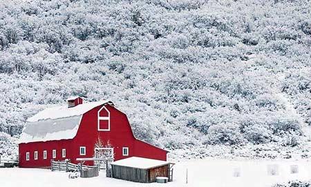 圖文:紅色的農舍被一片白色包圍