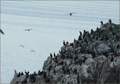 鳥島_青海湖景點指南_樂途旅遊網