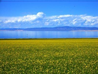 7月的青海湖_青海湖景點指南_樂途旅遊網