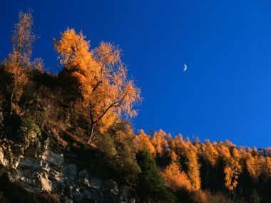 新疆秋天風光