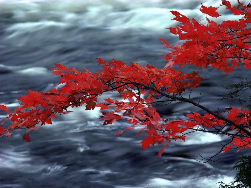 秋天風光-3