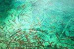 圖片:犀牛海裡的魚和野鴨