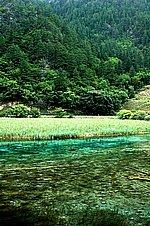 圖片:九寨溝黃龍之旅 蘆葦海風景