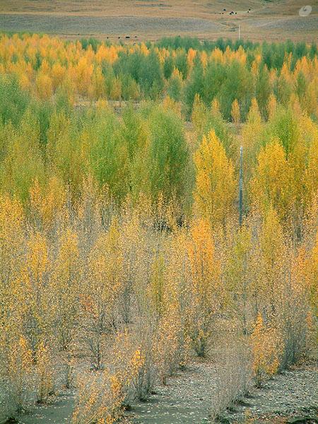 圖片:稻城傍河