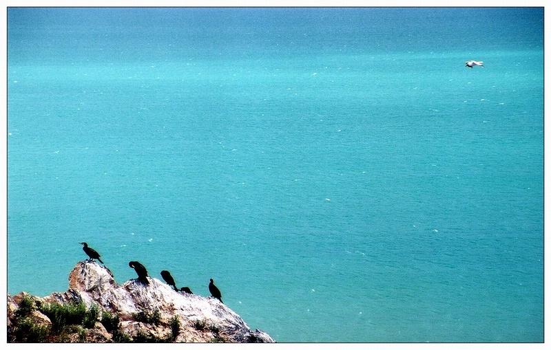 圖片:青海-鳥島