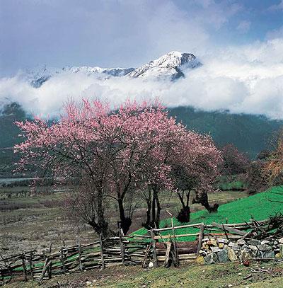 西藏林芝風景