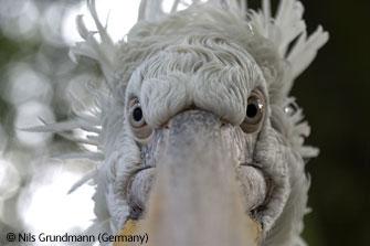 2006年度BBC野生動植物最佳圖片