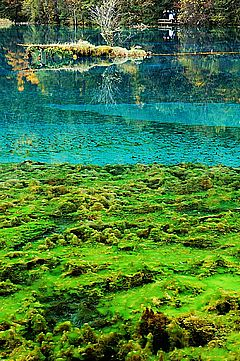 圖片:九寨溝風景區