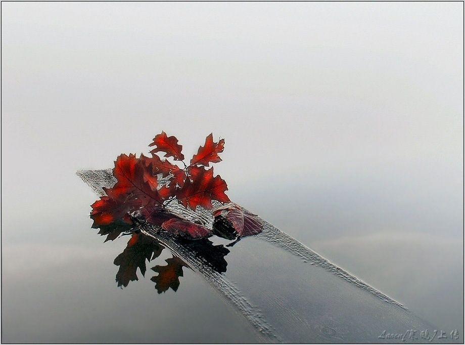 攝影作品:視覺盛宴-動植物篇