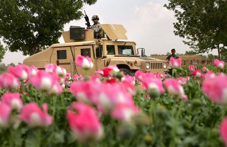 圖文:美國陸軍越野車經過阿富汗罌粟種植地