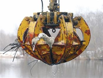 圖文:天鵝在奧地利南部水電廠附近死亡