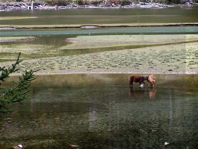 圖片:康定蓮花湖