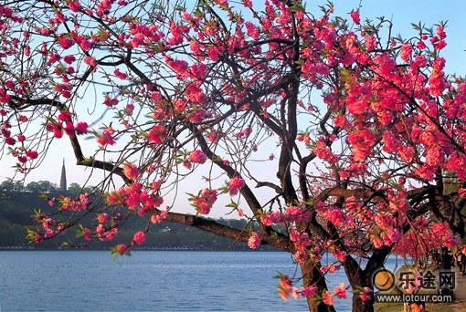 夾岸桃花蘸水開_