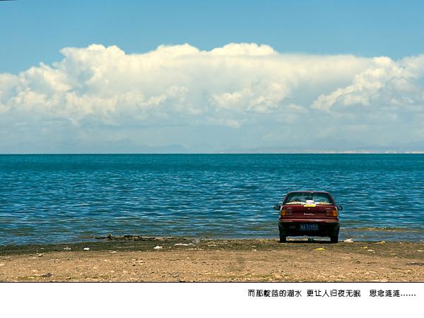 青海湖油菜花圖片