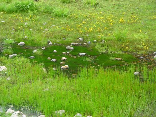 雲南香格里拉普達措國家森林公園