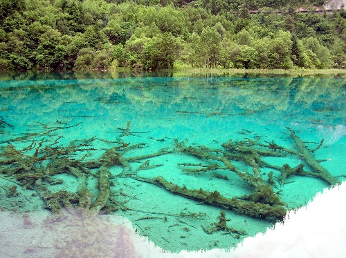 九寨溝圖片-清澈透明的湖水