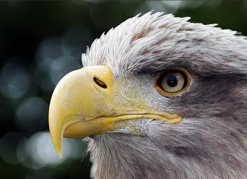 圖片:國外優秀攝影作品-動物篇