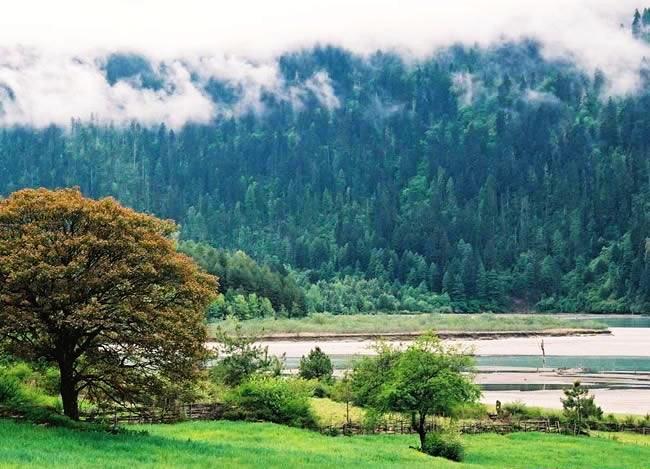 西藏波密風景