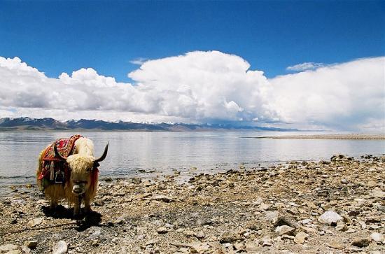 圖片:西藏的三大聖湖-納木錯