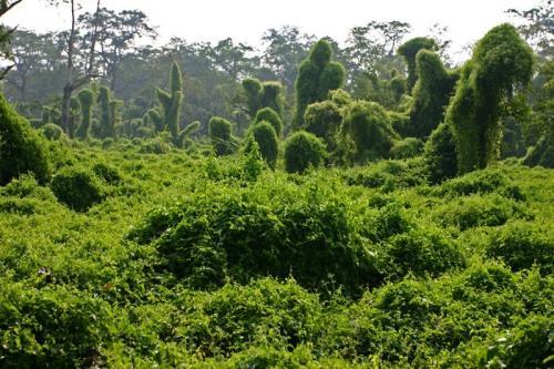 尼泊爾風光圖片:奇達旺國家森林公園