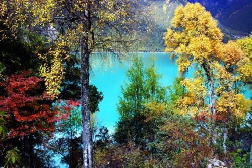 西藏林芝秋季風光-巴松錯風景區