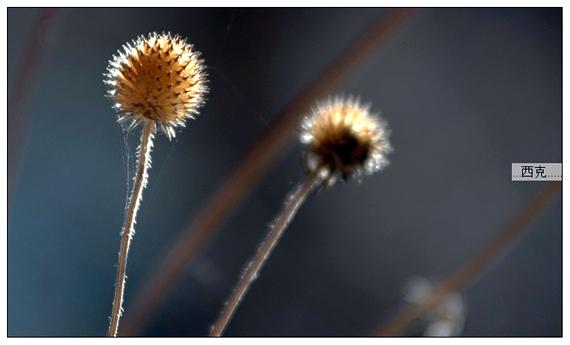 九寨溝冬景圖片