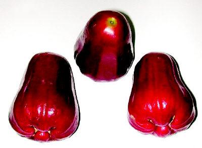 台灣特產水果-頂級黑珍珠蓮霧