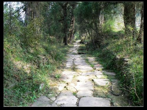 四川風景圖片:古蜀道翠雲廊