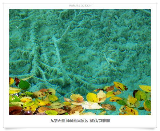 四川九寨溝神仙池風景區圖片