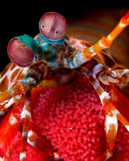 2010年最佳海底攝影照片:卵的忠實保護者