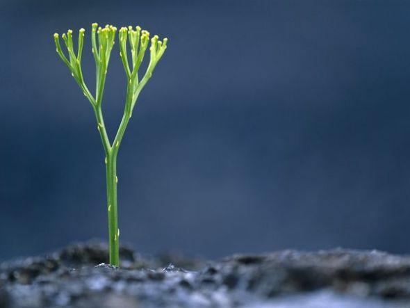 夏威夷熔岩中生長的蕨類植物