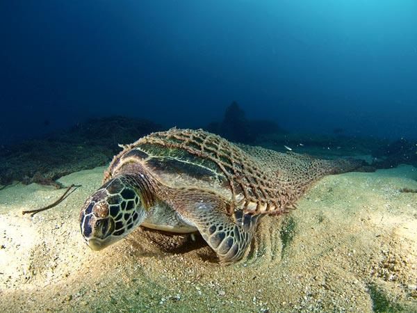 2010年最佳海底攝影照片:水下被困者