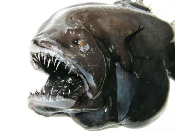 格陵蘭島附近奇異物種