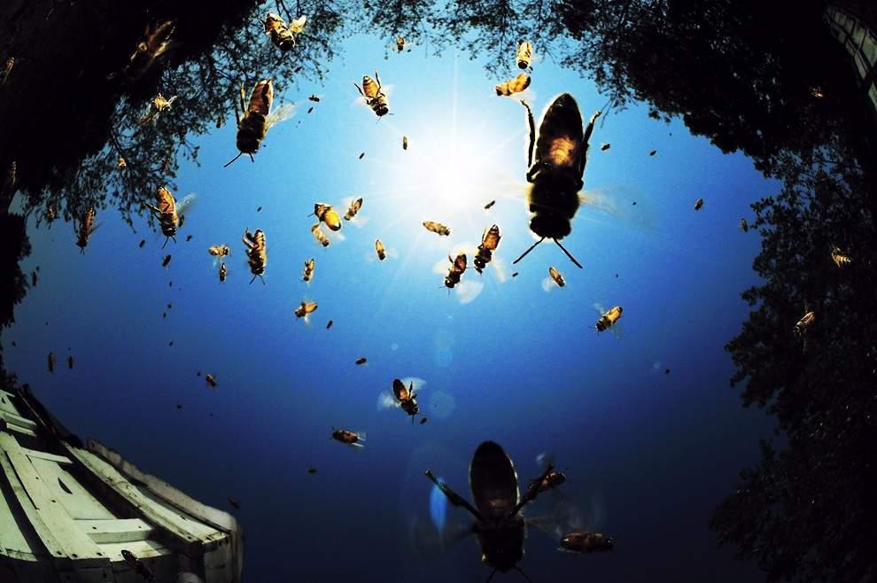 高清圖片:2010年美國國家地理攝影大賽作品-救贖。為拯救世界而珍惜生命