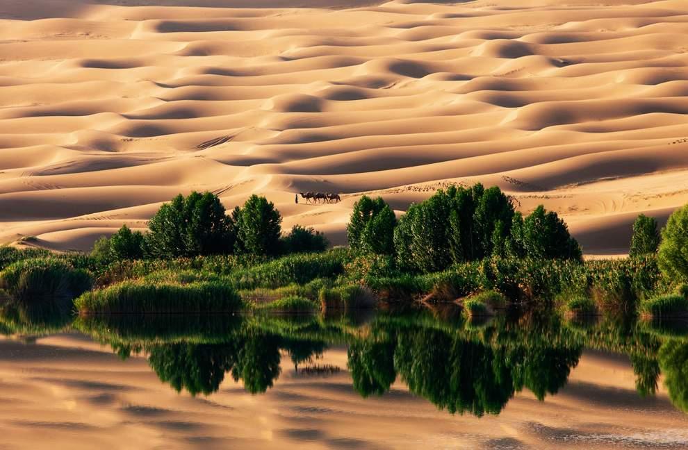 高清圖片:2010年美國國家地理攝影大賽作品-沙漠綠洲