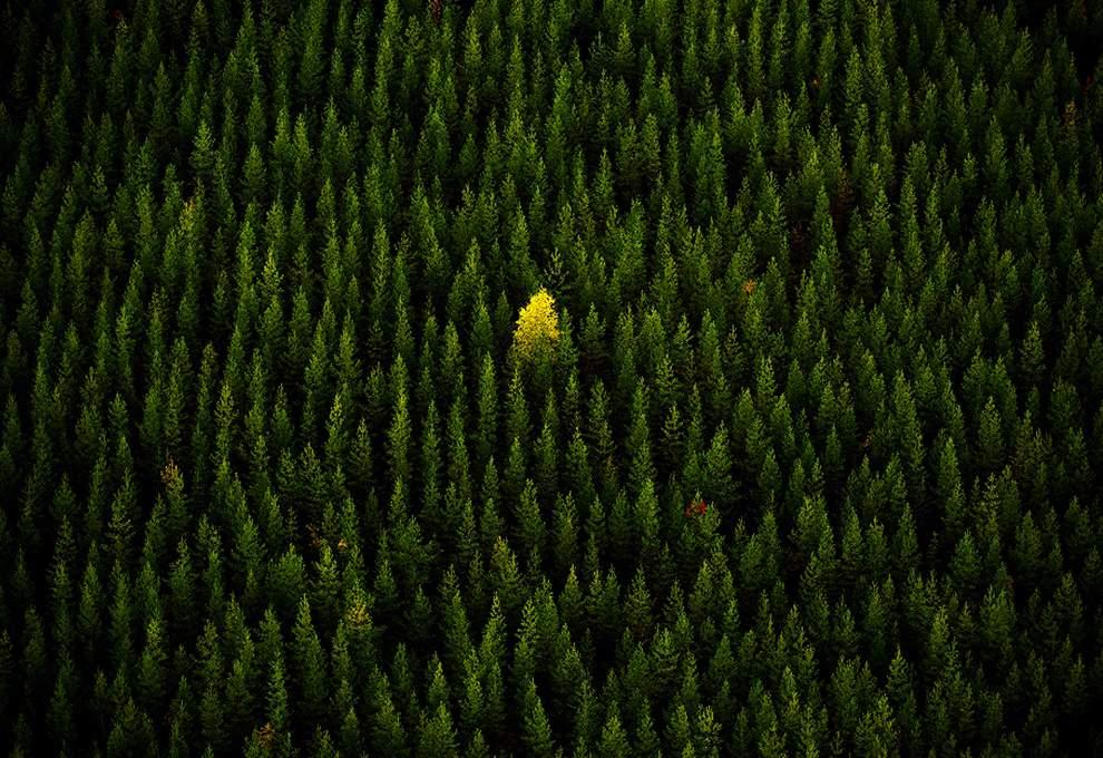 高清圖片:2010年美國國家地理攝影大賽作品-孤芳自賞