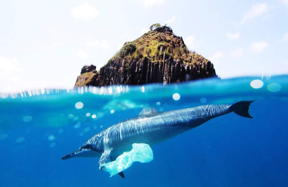 高清圖片:2010年美國國家地理攝影大賽作品-巴西費爾南多迪諾羅尼亞群島是一個野生動物保護區,然而今天,即使生活在如此偏僻群島水域的海豚也成了不良消費習慣的受害者