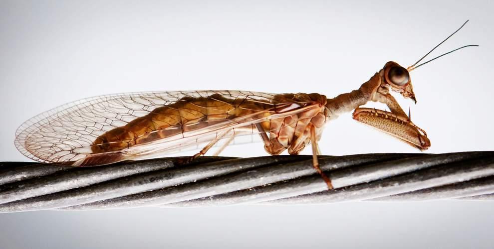 高清圖片:2010年美國國家地理攝影大賽作品-神秘的蟲子