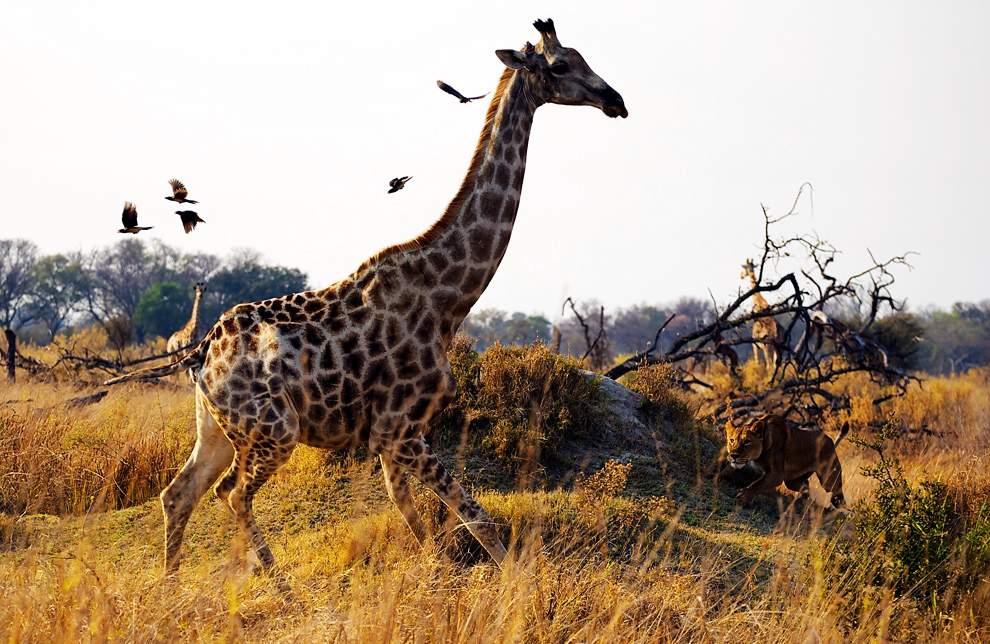 高清圖片:2010年美國國家地理攝影大賽作品-博茨瓦納Kanana露營地