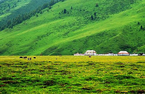 四川景點圖片:甘孜道孚縣龍燈大草原