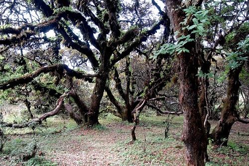 四川風景圖片:四川格薩拉風景區