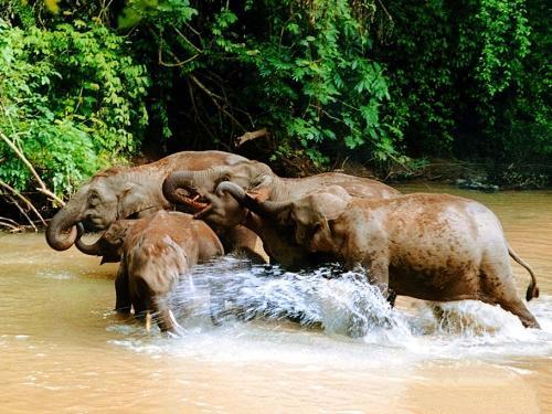 雲南景點介紹:西雙版納野象谷景區