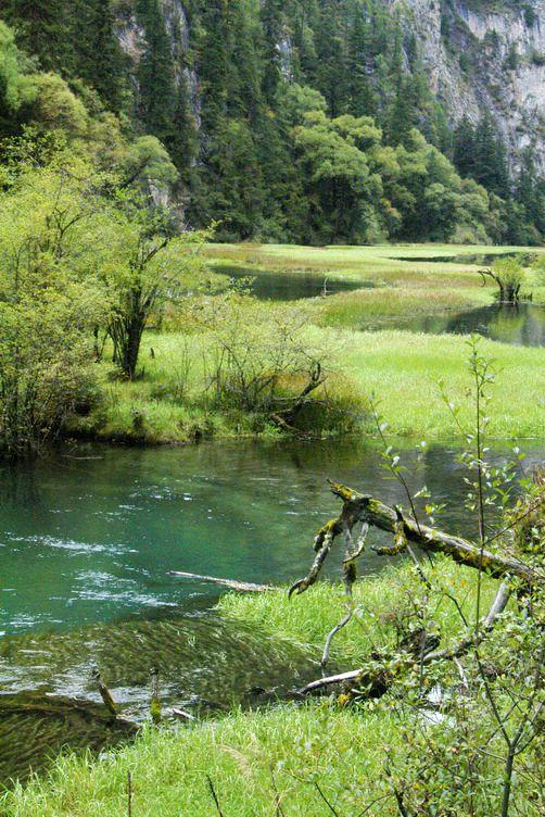 九寨溝圖片欣賞:延伸的水草