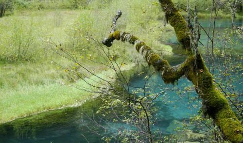 九寨溝圖片欣賞:草樹水的鏈接