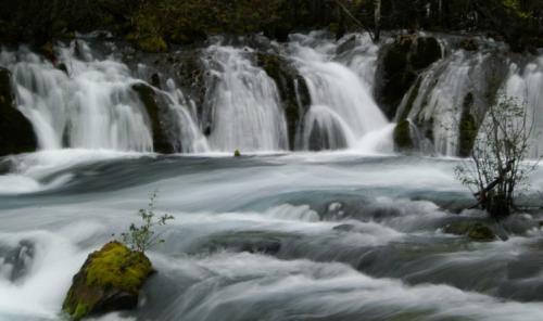 九寨溝圖片欣賞:樹正流水