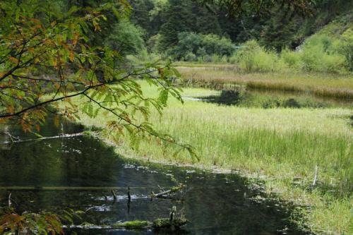 九寨溝圖片欣賞:水上的草原