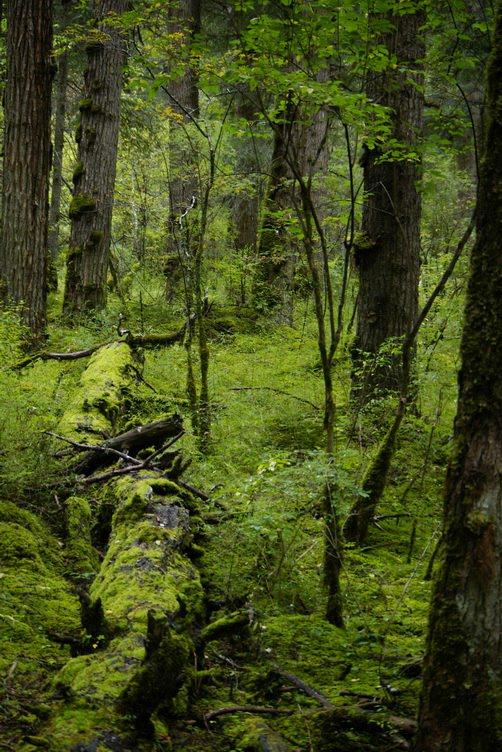 九寨溝圖片欣賞:原始森林