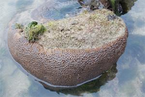 新加坡圖片:無須大費周章到鄰國潛水就能看到稀有的海洋生物,難能可貴