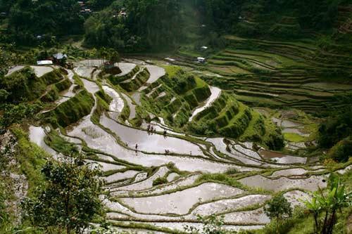亞洲世界遺產-巴拿威梯田,菲律賓